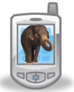 Elephant on phone