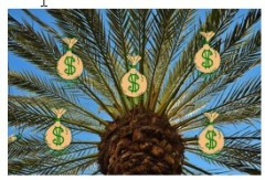 Palm tree with money bags